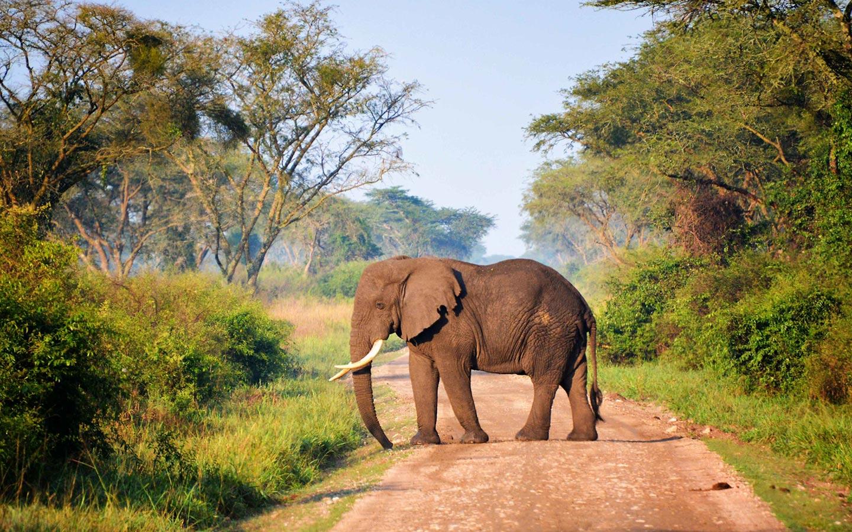 elephants in Queen Elizabeth national park - Best of Uganda Gorilla Trekking Safari